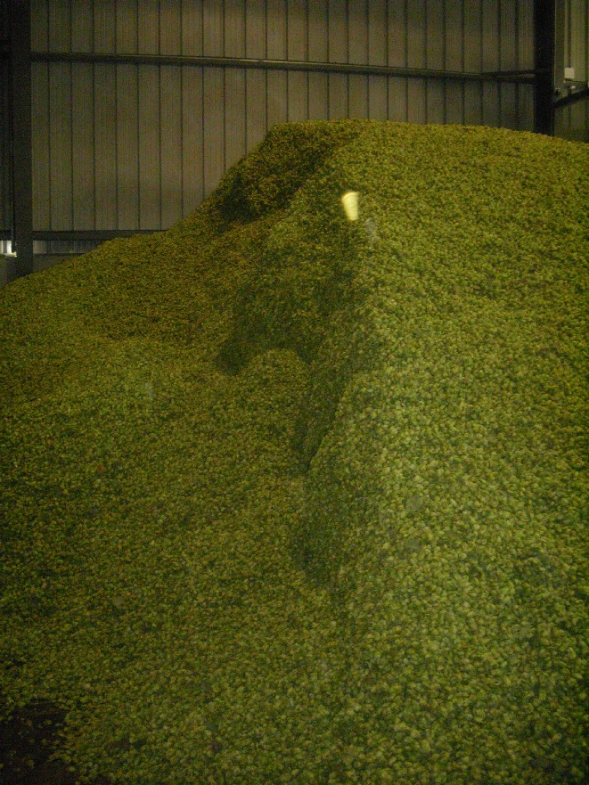 piles_of_hops-small.jpg